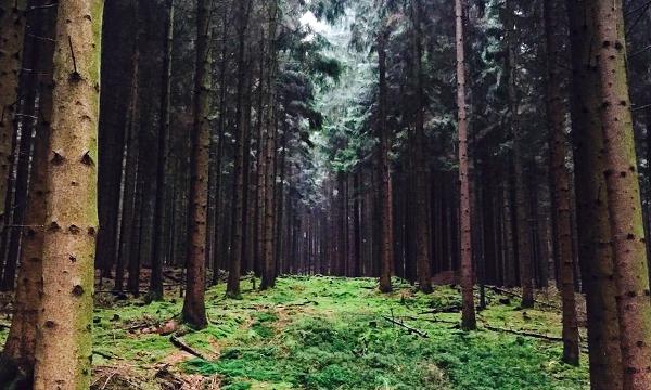 Ressource Holz. Ökologisch Parkett verlegen.